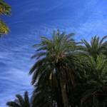 Im Palmenwald